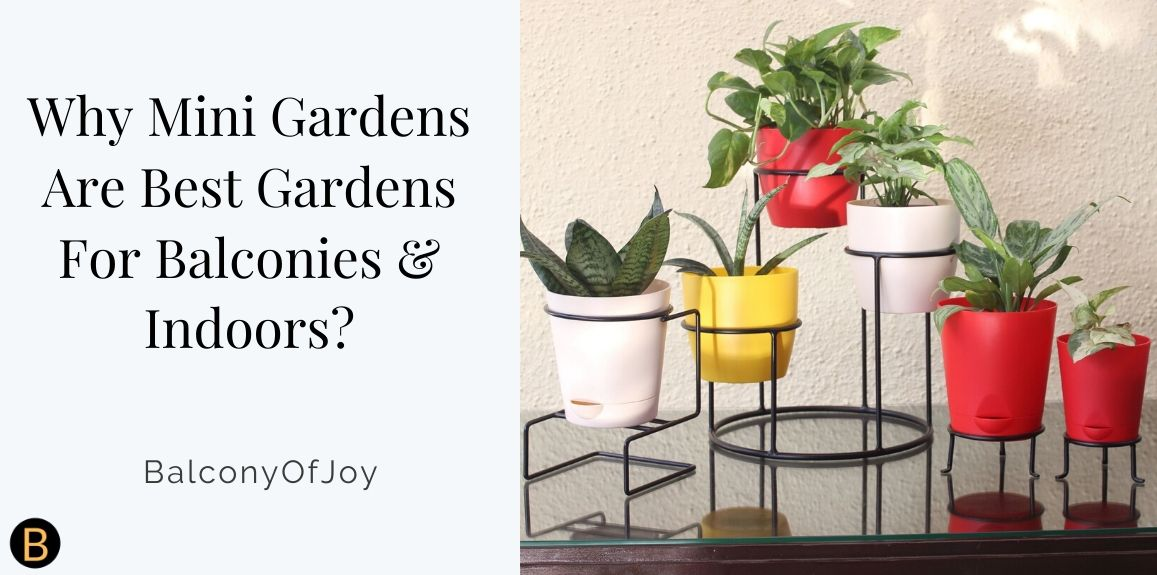 Why Mini Gardens Are The Best Gardens For Balconies and Indoors?