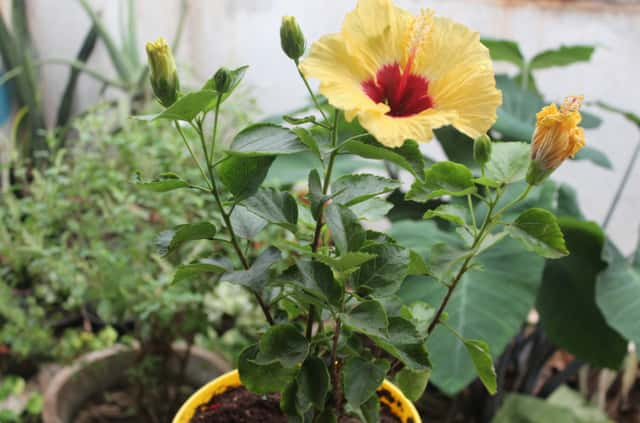 Buy organic plants, seeds and organic manure